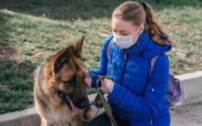 Aumentan en Zaragoza las adopciones de perros durante la cuarentena