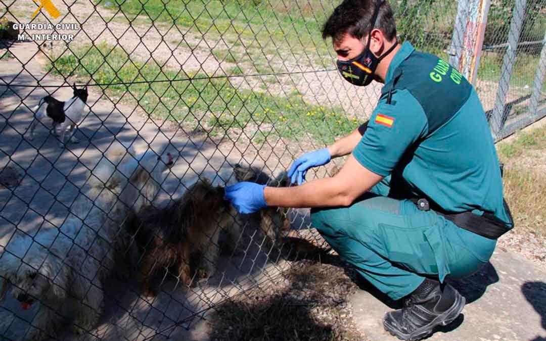 El Seprona encuentra en una finca en Zaragoza a 544 perros en unas condiciones deplorables