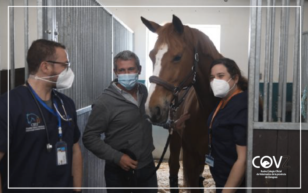 Dan de alta al último caballo ingresado en el Hospital Clínico Veterinario por rinoneumonía equina