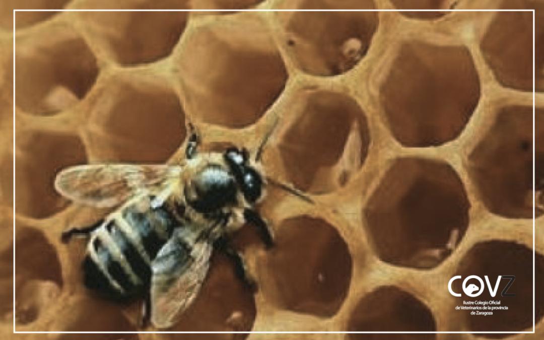 El Gobierno de Aragón incrementa las ayudas a la apicultura un 73% en 2021
