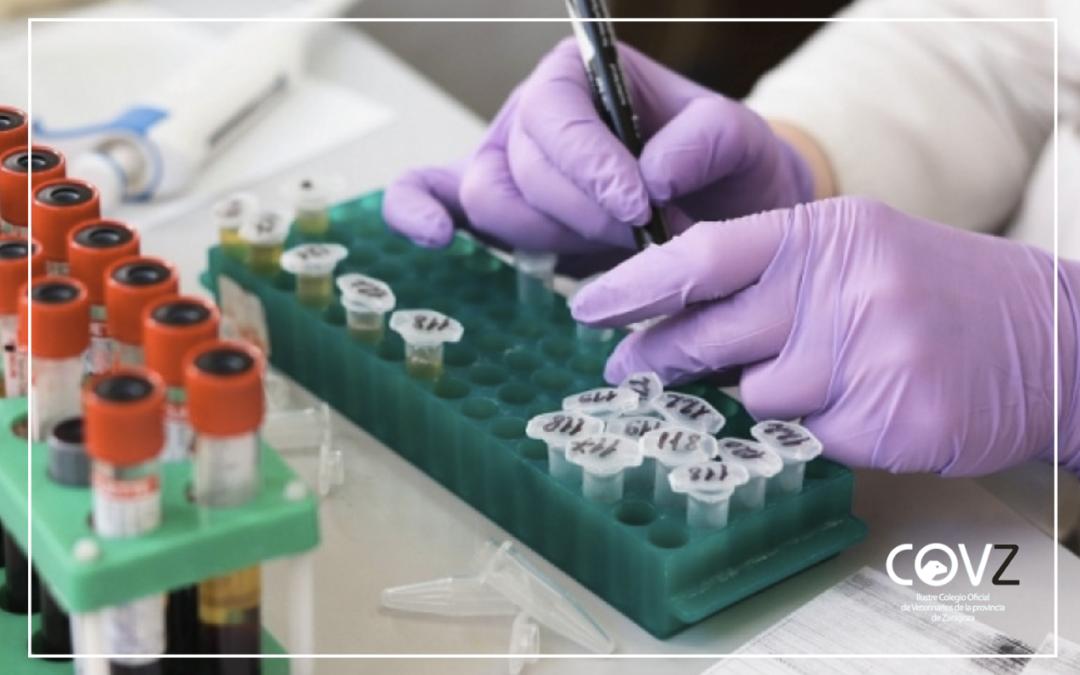 Piden un enfoque comparativo para investigar infecciones por coronavirus en humanos y animales