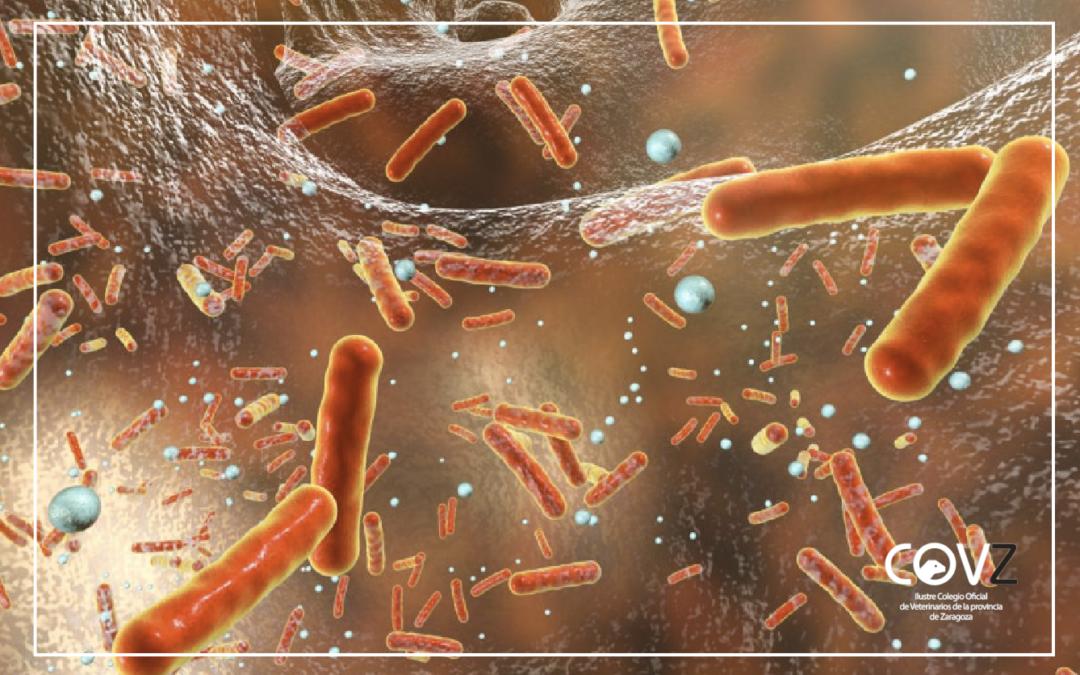 Nuevo informe de resistencia a antimicrobianos en bacterias zoonóticas