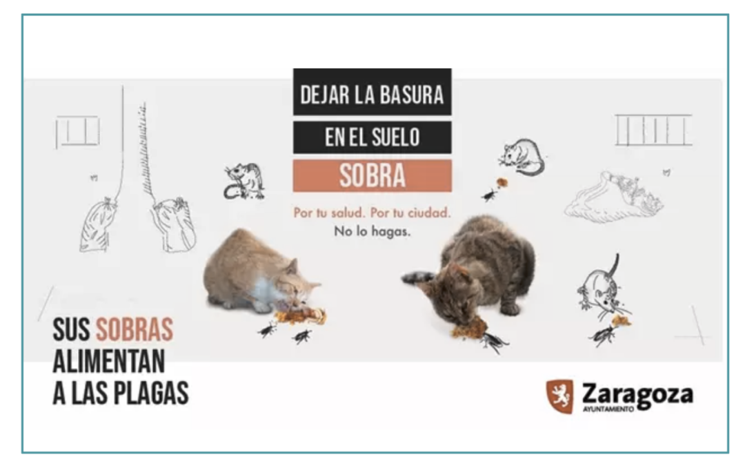 El Ayuntamiento de Zaragoza alerta del riesgo de plagas el dar de comer a palomas, patos o gatos en la vía pública