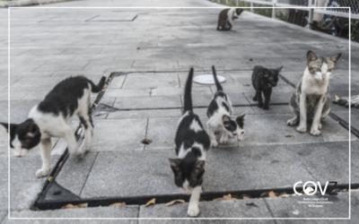 Veterinarios crean una guía de actuaciones sobre las colonias felinas