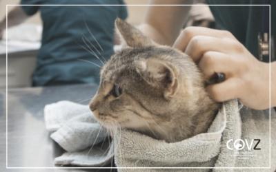 Alertan de un aumento de casos de pancitopenia felina ligados a la dieta en Reino Unido