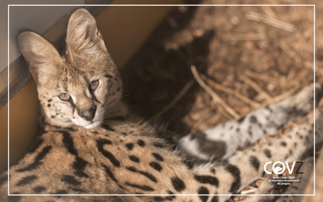 Un estudio muestra que 1 de cada 7 animales exóticos rescatados porta una zoonosis