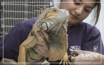 La importancia de consultar con el veterinario antes de adquirir un reptil